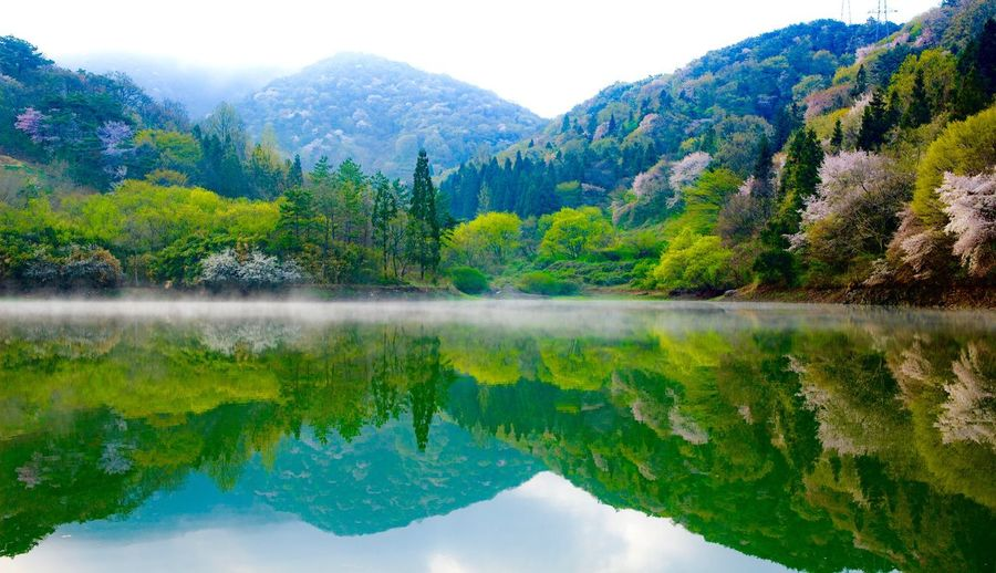 reflaction with cherry Blossom Lake Reflection Mountain Water Nature Beauty In Nature Tranquil Scene Landscape