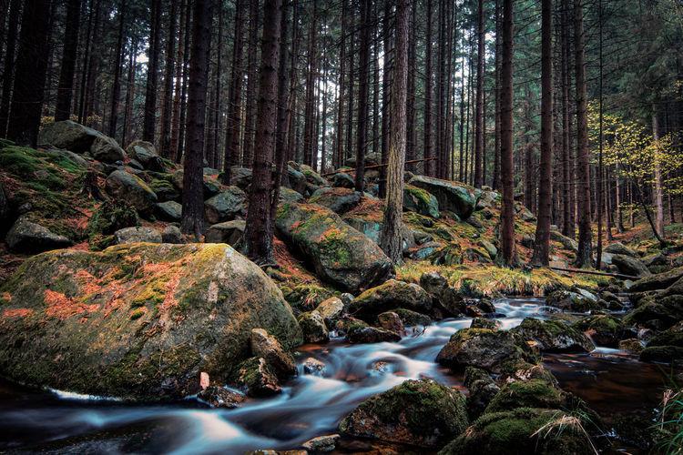 Pine Wood Day