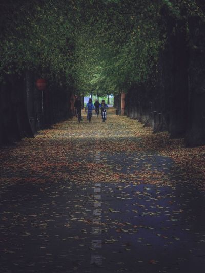 Autumn Leaf People Outdoors Togetherness Tree Nature Day Lush Foliage Alleyway Alley Travel Destinations City Life City Urban Nature The Way Forward Biking Tree Trunk Street Photography Streetphotography The Street Photographer - 2018 EyeEm Awards #urbanana: The Urban Playground Autumn Mood