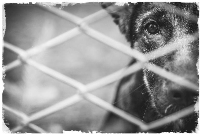 Close-up portrait of dog seen through metal fence