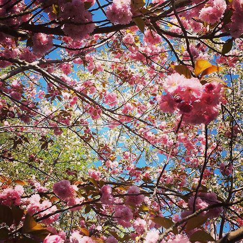 Have some pretty spring flowers ♡ Gonzaga Spokane Washington Spring SpringFever Flowers