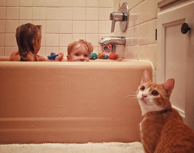 Close-Up Of Cat With Siblings In Bathroom