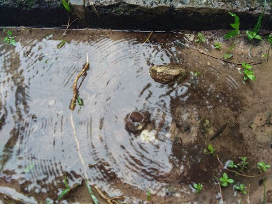 จุดจบของสายฝน คือหยดลงมาก็เป็นสายน้ำ Water Day Outdoors High Angle View No People Nature Tree Animal Themes