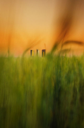 Anonymus HUAWEI Photo Award: After Dark Rural Scene Gold Colored Agriculture Grass Architecture Building Exterior Sky Built Structure