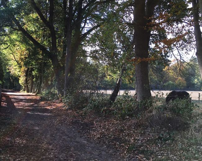 EyeEmNewHere Landscape With Horse Footpath Photography Footpath Footpath As Landscape Fall Autumn Tree Plant Nature No People Growth Day Sunlight Tranquil Scene Forest Field Scenics - Nature