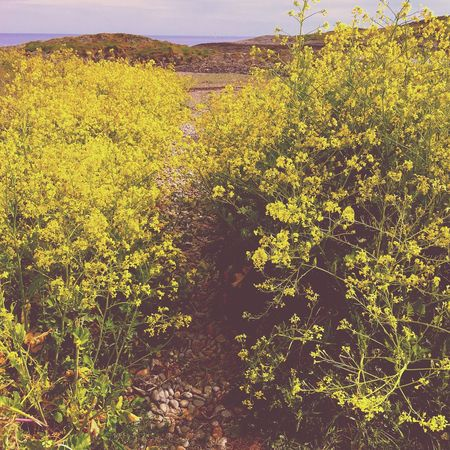 Nature Growth Plant No People Beauty In Nature Landscape Outdoors Yellow Day Tree Flower