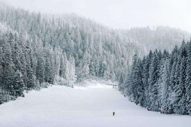 Nature Landscape Winter Sport Winter Trees Winter Landscape One Person Ski Ski Track Tree Snow Winter Cold Temperature Pinaceae Forest Fog Pine Tree Sky Ski Holiday Skiing Winter Sport Ski Resort  Ski Lift Ski-wear