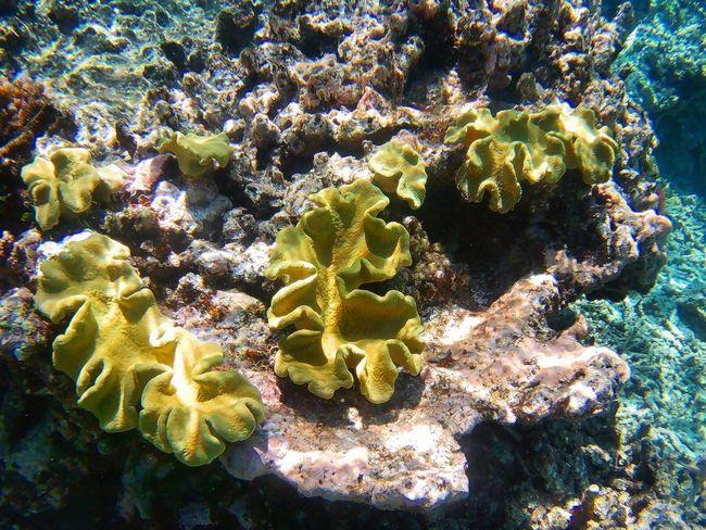 Underwater Sea Life UnderSea Sea Coral No People Nature Beauty In Nature Water Day ~ Greatbarrierreef Cairns, North Queensland, Australia