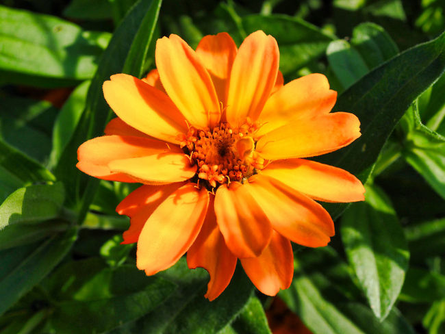 Jeans Brown Photography - Jeans Brown Photography Beauty In Nature Close-up Day Flower Flower Head Flowering Plant Focus On Foreground Fragility Freshness Growth Inflorescence Leaf Nature No People Orange Color Outdoors Petal Plant Pollen Vulnerability