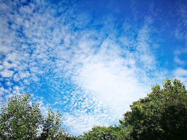 Blue Sky Low Angle View Tree Nature Cloud - Sky Day Beauty In Nature No People Outdoors Forest Freshness Upper Bavaria Germany