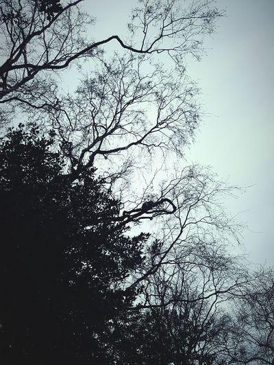 Before Ten Tree Sky Outdoors Beauty In Nature Sqirrel Spotting