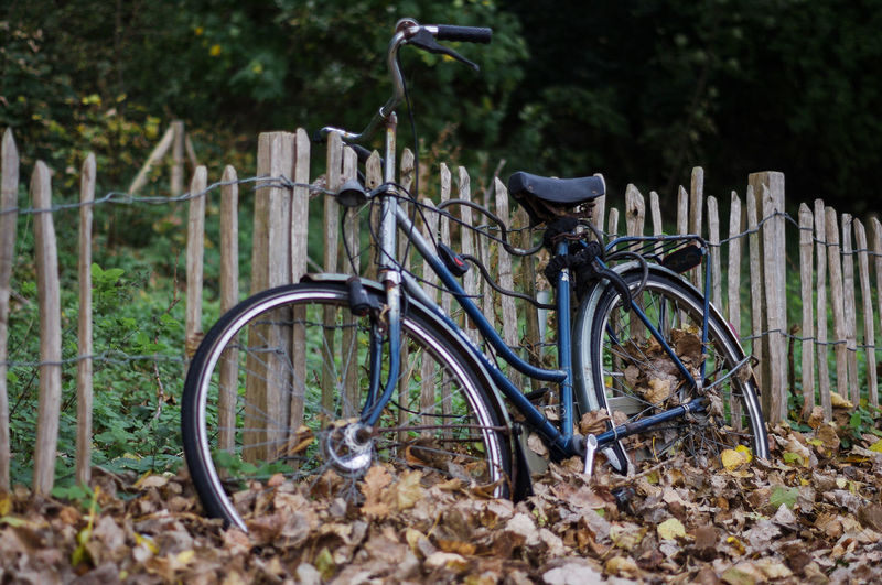 Autumn Abandoned Bicycle Bicycle Rack Close-up Day Fall Fence Land Vehicle Leaves Metal Mode Of Transport Nature No People Old Outdoors Plant Rusty Stationary Transportation