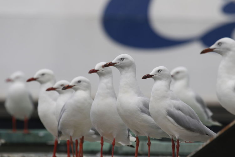 Animal Themes Animal Wildlife Animals In The Wild Bird Day Nature No People One Direction Outdoors Public Viewing Seagulls Togetherness Viewing