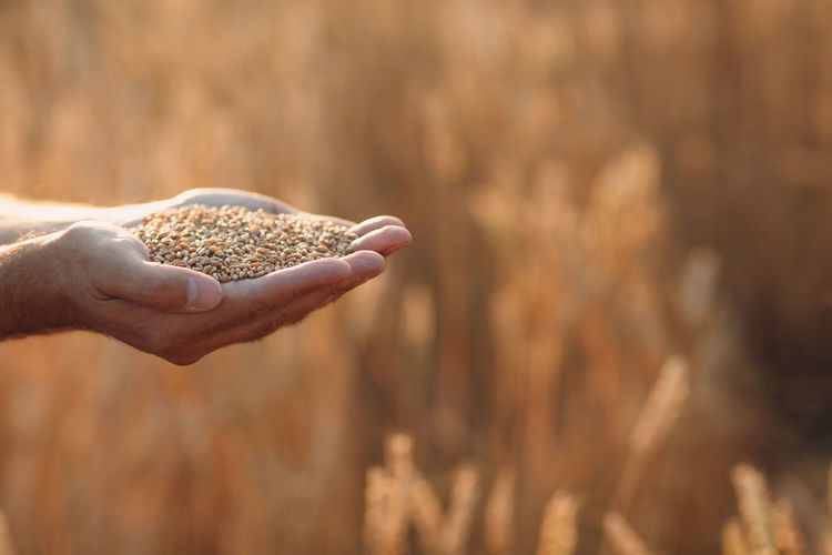 Cropped hand of man holding grains outdoors