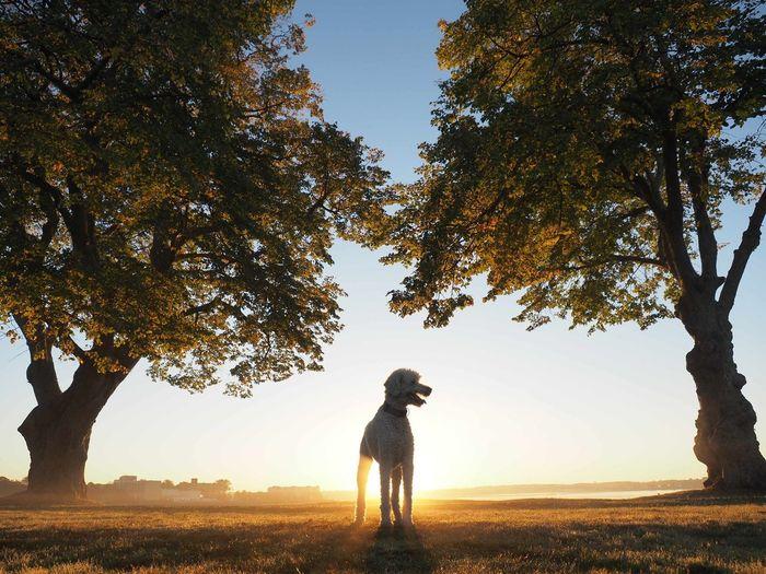 Puppy Sunrise