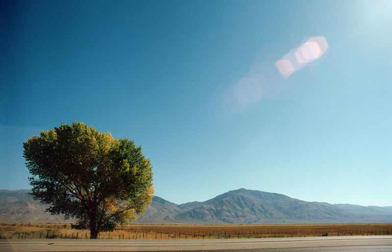 Road trip on hwy 395 near Independence, Ca with views of the Eastern Sierra's California Eastern Sierras, CA Highway 395 Independence Beauty In Nature Clear Sky Day Ektar100 High Desert Hwy 395 Landscape Mountain Nature No People Outdoors Road Trip Sky Tranquility Tree EyeEmNewHere