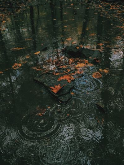 Water Leaf Fall Rain Autumn Reflection Nature Rippled Beauty In Nature