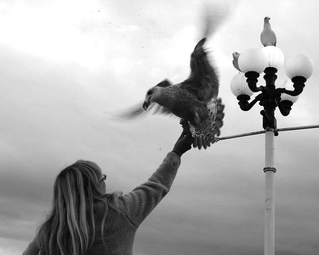 Rear view of woman feeding seagull against sky