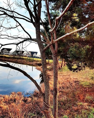 Naturephotography Naturelover Nature Landscape Landscapephotography Treelovers Tree Branches Lake Lakeview Silouette Reflections Aneyeforaphoto Photographylovers Photography Mypointofview Picofthedays Pictureoftheday Samsungphoto Samsung Igmasters Igbest Brightcolors New House bythelake