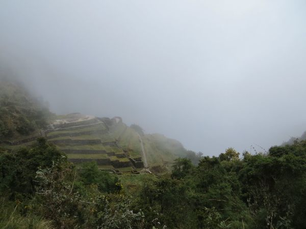 Landscape Nature Tree Fog Beauty In Nature Tranquility Tranquil Scene Mountain Scenics Day Mist No People Growth Outdoors Hazy  Sky Travel Destinations Inca Ruins Peru Tranquility Foggy