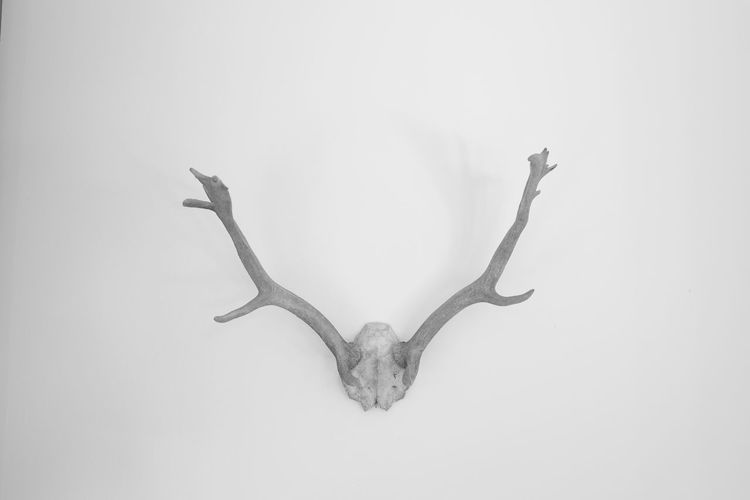 White. Deer Head Geweih Hunting Jagd Nofilter White Album Black & White Blackandwhite Black And White Furnishing Decoration Monochrome Photography