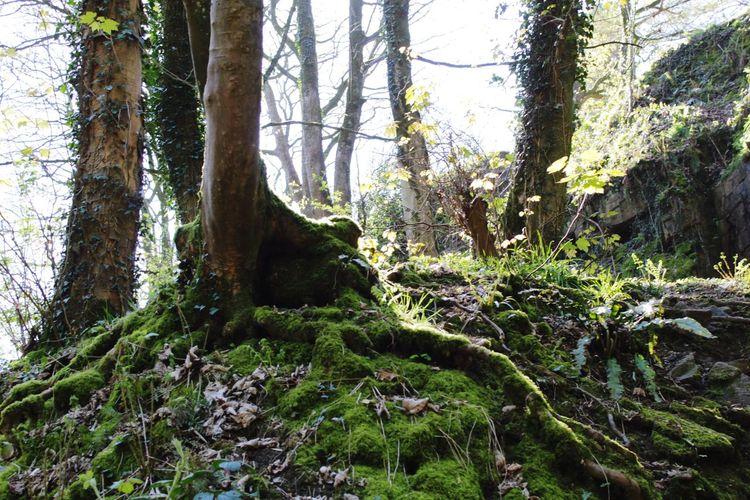 Fairy glen Moss