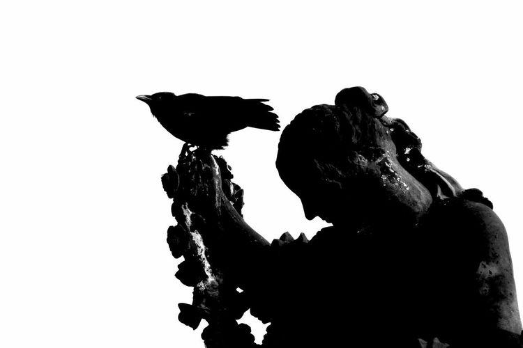 Friday the 13th Getting Inspired Fortheloveofblackandwhite EyeEm Best Shots - Black + White Blackandwhite Photography Monochrome Silhouette NEM Black&white NEM BadKarma Streamzoofamily Malephotographerofthemonth