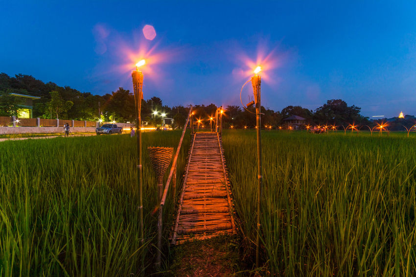 Bamboo Bridge in Paddy Field, Chiang Rai, Thailand. Agriculture Bamboo Bridge Bamboo Bridge In Paddy Field, Chiang Rai, Thailand. Blue Field Footpath Grass Grassy Green Green Color Growth Illuminated Lens Flare Nature Night Outdoors Paddy Field Park Plant Scenics Sky Sun Tranquil Scene Tranquility Tree