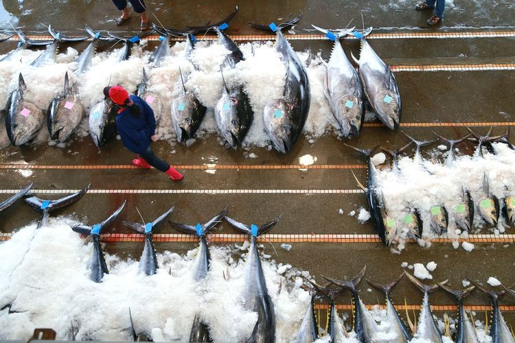 Everyday Life A Bird's Eye View From My Point Of View Eye4photography  Snapshots Of Life Tuna Auction Beautifully Organized南方澳 NanFangAoTaiwan