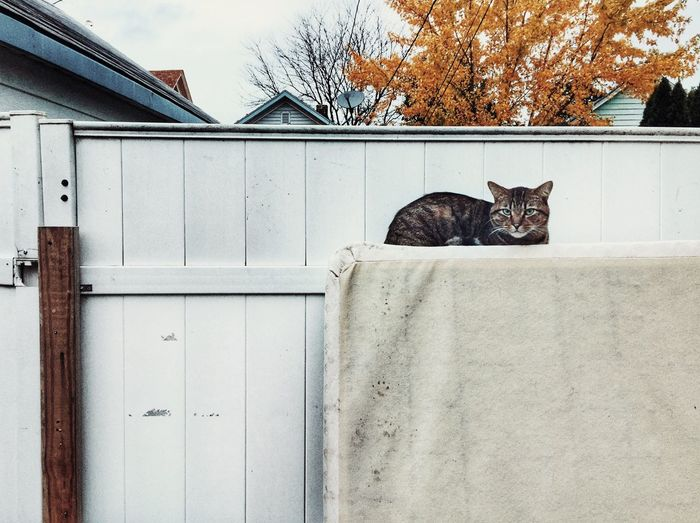 Cat lying on a wall of a house
