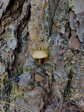 Tree Mushroom Winter Interior14 Brazil