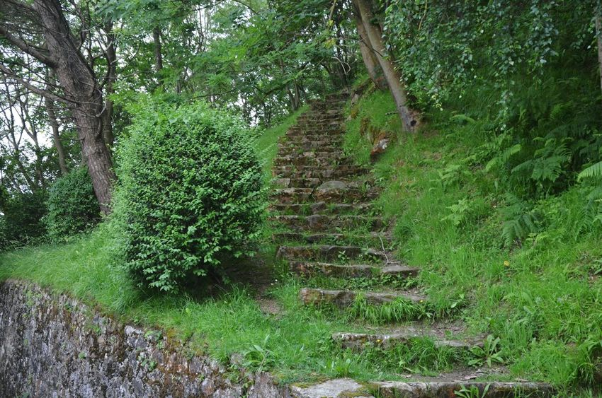 Steps ЯПИспания Green Color Beauty In Nature Outdoors Tree Growth Grass Nature Travel Travel Photography SPAIN San Sebastian EyeEm Best Shots EyeEm Gallery Wild Stair Steps Parks City The Secret Spaces Exotic Scene Dirt Track Steps And Staircases