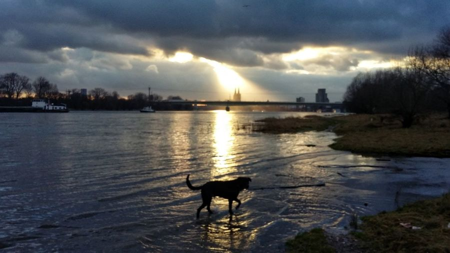 Sunset Sun Beams Sun Rays River Riverside Outdoors No People Dog Siluette Sign Of Hope Sign Of Respect EyeEm Ready