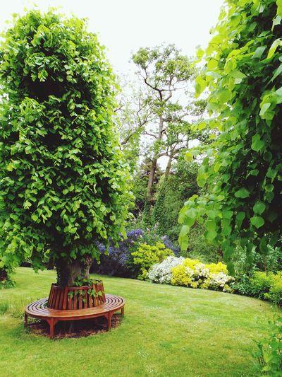 Tree seat Tree