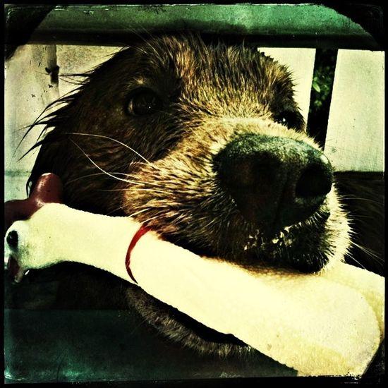 a duck killer 🐾🐶 My Dog Pets Enjoying Life Kamin <3
