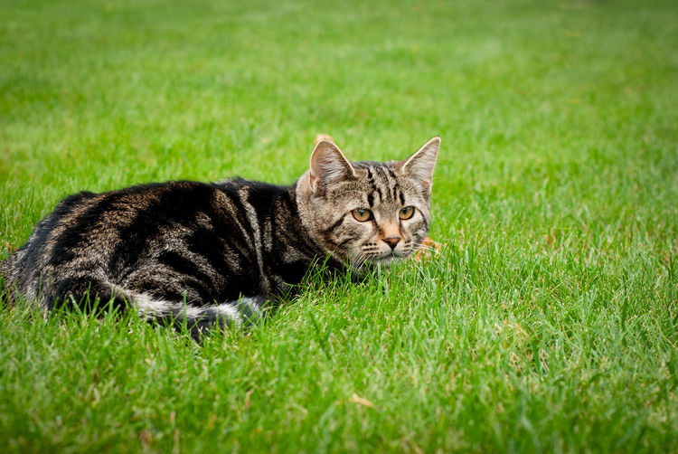 Cat Pet Nature Photography Wild Wildlife Citty Citty Cat Life Cat Lovers Grass Kitty Kitty Cat Adult Young Animal Hunting Green