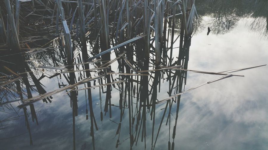 My Fishing Spot Bullrushes Cold Frosty Freezing Pond Water