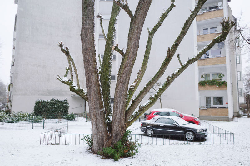 Snow covered tree by building during winter