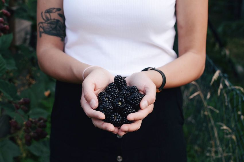 Blackberries Gardening Garden Blackberries Blackberry One Person Holding Real People Healthy Eating Fruit Human Hand