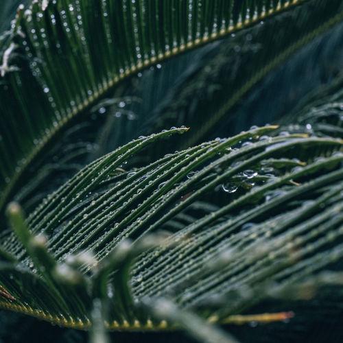Close-up of raindrops on leaf