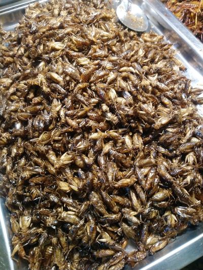 Close-up of insect in plate