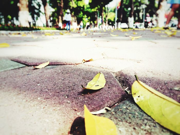 MyHanoi Autumn Leaves Autumn In My Heart Somewherefullofoldthings
