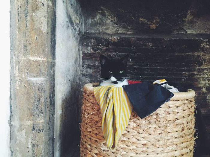 A cat in a basket. One Animal Domestic Animals Domestic Cat Day Laundry basket Home inside Humour black and white cat Daft Cats Rule