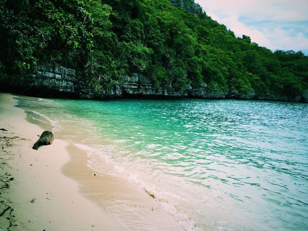 Water Beach Sea Sand Shore Tree Tranquility Tranquil Scene Nature Scenics Coastline Beauty In Nature Majestic Non-urban Scene Outdoors Day Solitude Green Color Lush Foliage Wave