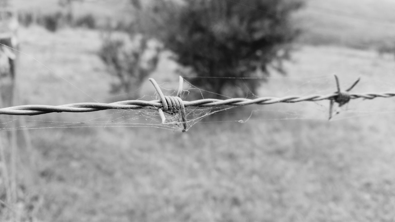 one animal, animal themes, focus on foreground, barbed wire, close-up, outdoors, day, no people, insect, animals in the wild, nature