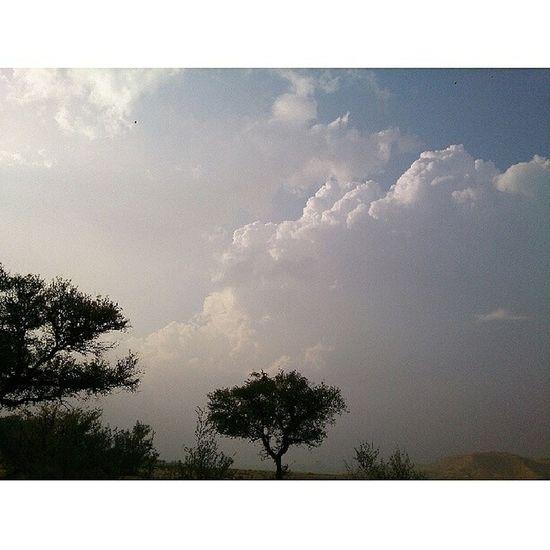 بدون تعديل Jnon Sky Beutefal Tree البر جميل تصويري عدستي بدون_تعديل