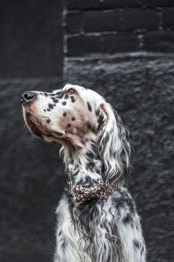 Animal Animal Themes Close-up Dog Dog Love Dog Fashion Dog Style Dogs Domestic Animals Mammal No People One Animal Pet Pets