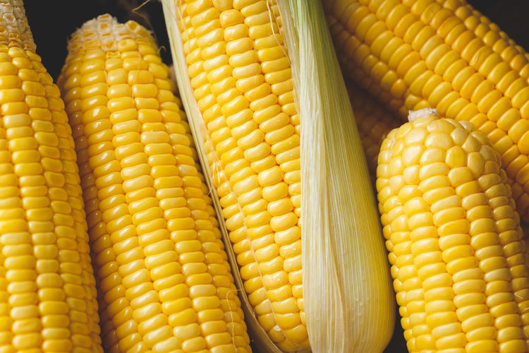 Fresh corns ASIA Agriculture Dark Diet Nature Raw Rustic Seed Vietnam Wood Art Cereals Cop Corn Food Fresh Grain Healthy Food Maize Nutrition Organic Sweetcorn Tropical Vegetable Vitamin