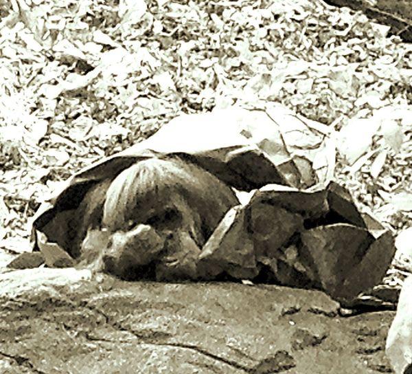 Nap Orangatang Zoo