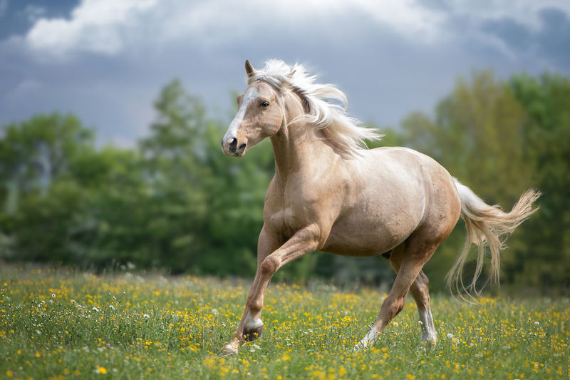 Horse Running On Grassy Field
